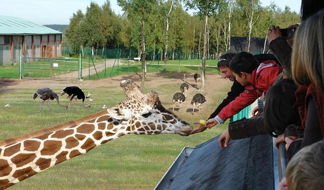 le monde sauvage safari parc d 39 aywaille aux4saules. Black Bedroom Furniture Sets. Home Design Ideas