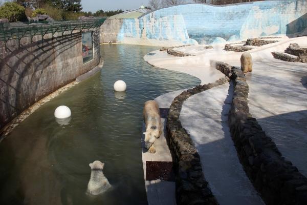 Le monde sauvage safari parc d 39 aywaille aux4saules for Parc sauvage 78